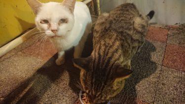とっとパーク小島釣果報告&野良猫のボン。
