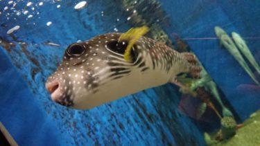 京都大学・白浜水族館へ行ってみた。