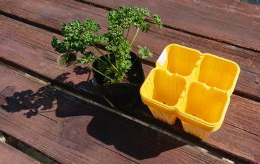 遂に今年もやってきた、家庭菜園の季節が!