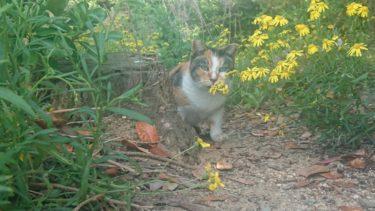 貝塚人工島の猫達とコッソリ野グソする連中の話。その1