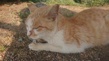 貝塚人工島の猫達とコッソリ野グソする連中の話。その2