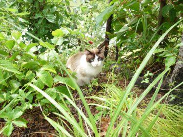 久々のクソ株日記と超綺麗な野良猫。